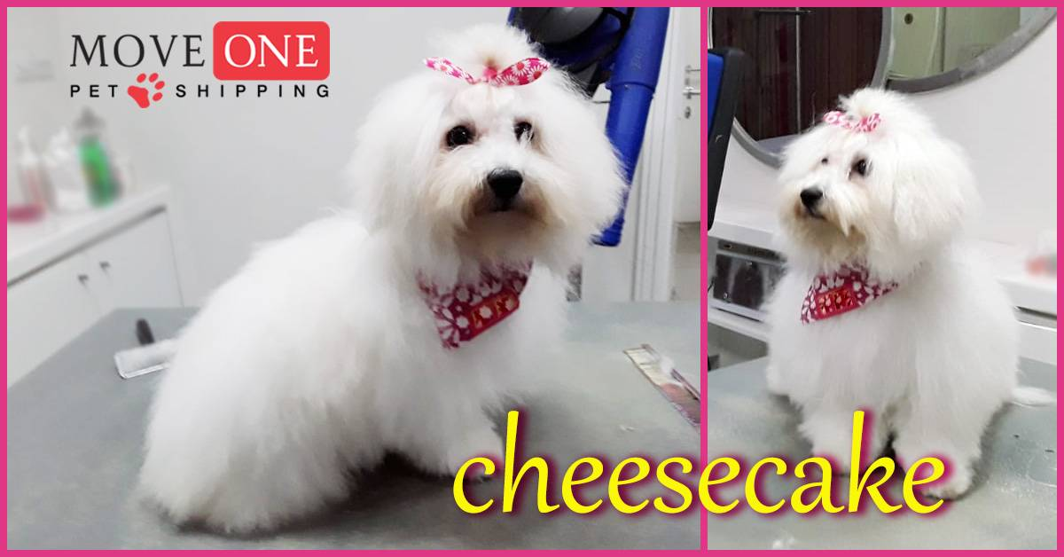 Move-One-Pet-Shipping-Cheesecake