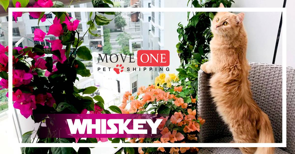 Move One Pet Shipping Whiskey