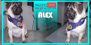 Move-One-Pet-Shipping-Alex