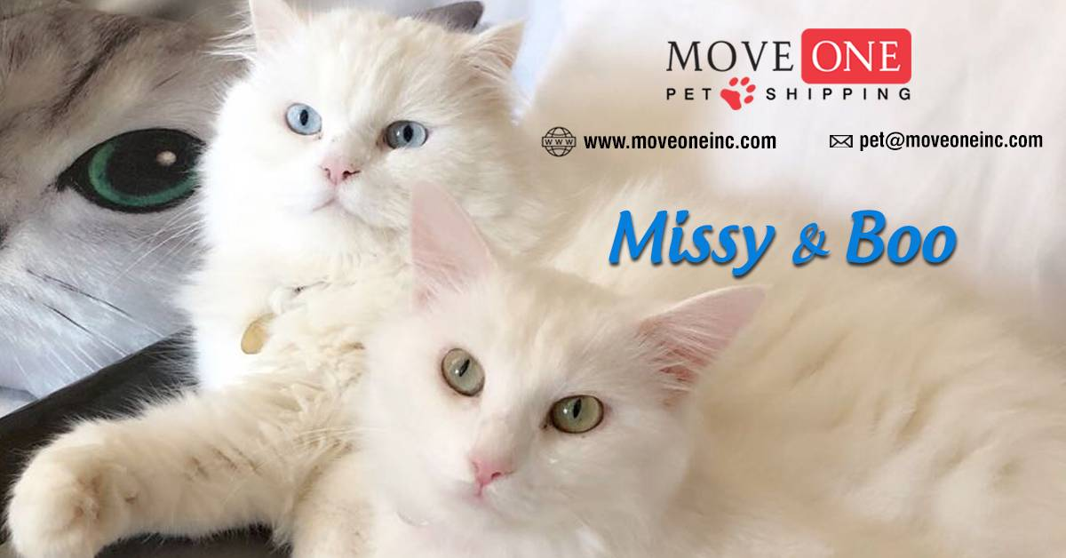 Move-One-Pet-Shipping-Missy-and-Boo