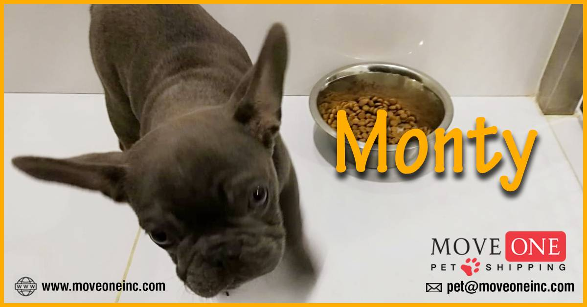 Move-One-Pet-Shipping-Monty