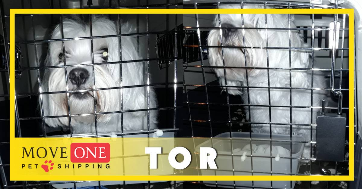 Move-One-Pet-Shipping-TOR