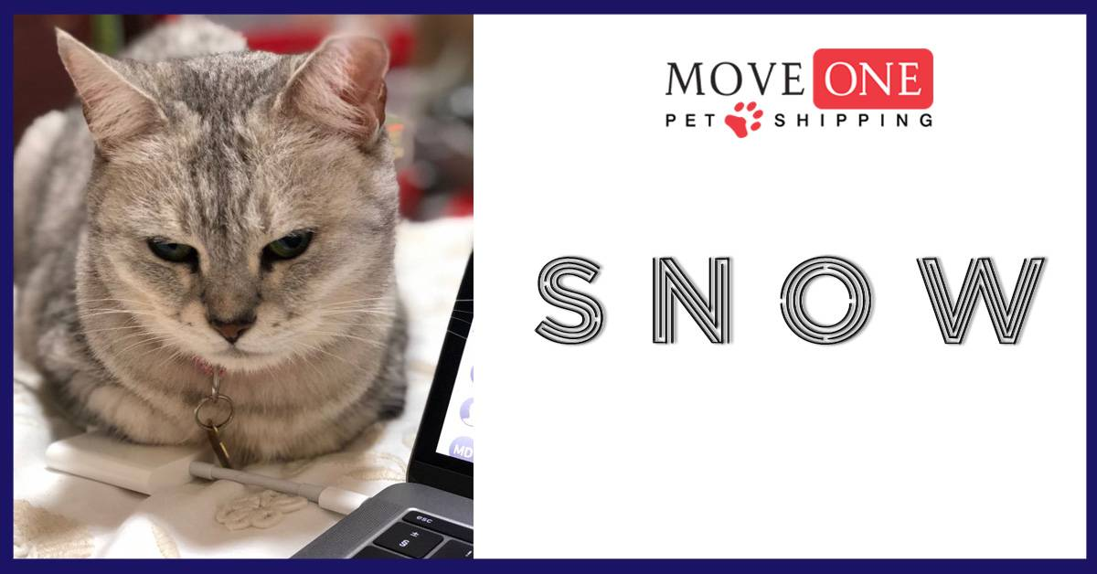 Move-One-Snow