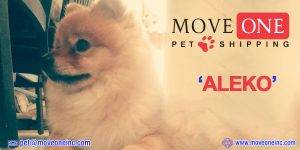Move-One-Pet-Shipping-Aleko